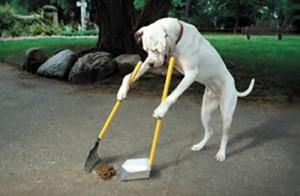 ไอเดียธุรกิจ - เก็บอึสุนัข