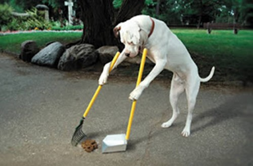 ไอเดียธุรกิจเรื่องขี้หมา - บริการเก็บอึสุนัข